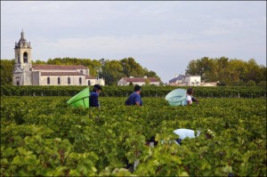 pickers-in-vineyard-300x199