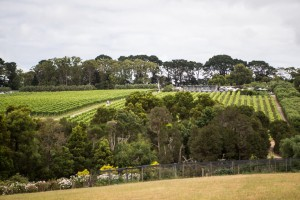 Montalto restaurantUltimate Winery Experiences of Australia