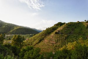 The_Prosecco_DOCG_hills_02_-_Photo_©Mattia_Mionetto